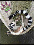 SOLD!!! RECYCLED CLOTHING TBL poseable Lemur