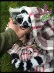 SOLD!!! RECYCLED CLOTHING TBL handmade Lemur by TouchedbyLavender