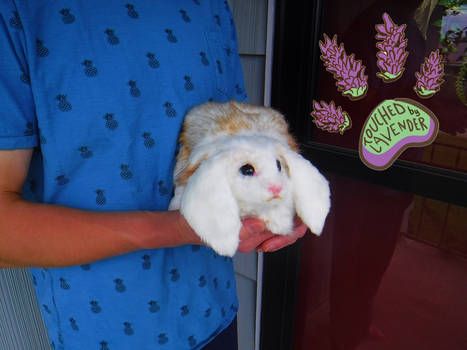 TBL recycled clothing lop rabbit