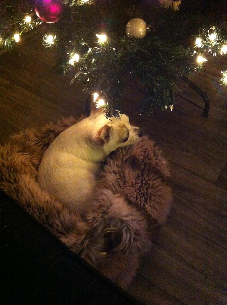 Christmas dog by Romyislief
