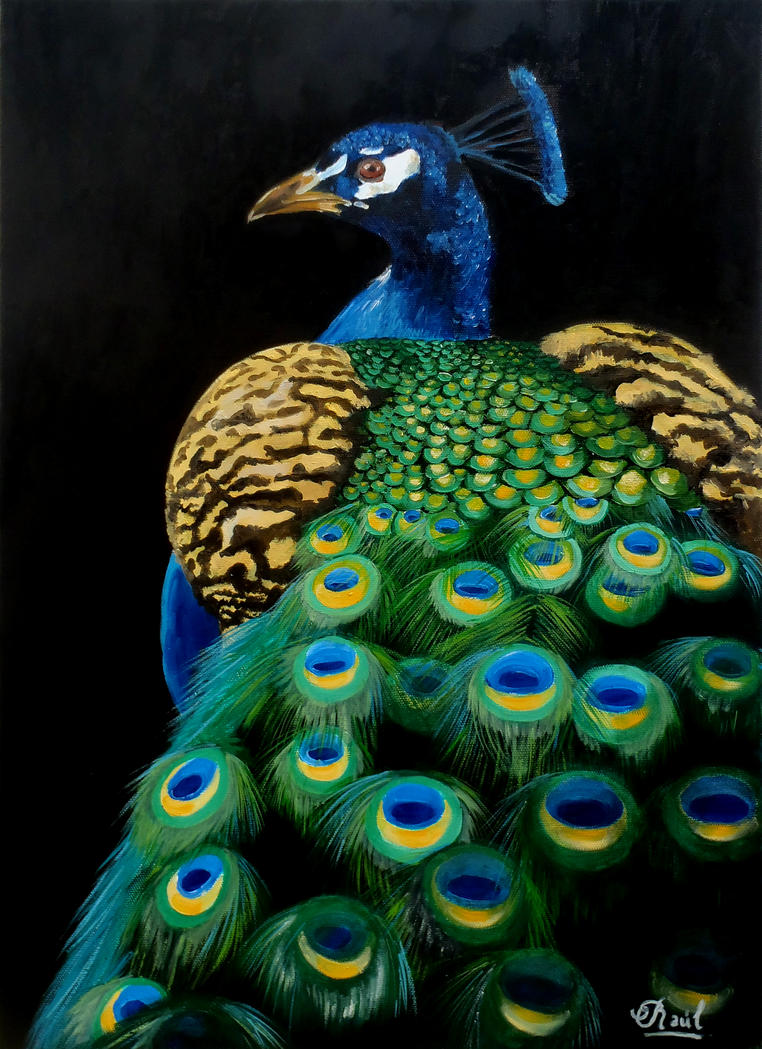 Peacock by lapizypincel