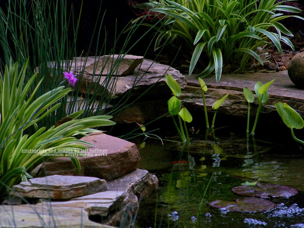 Small koi pond by jamdebris on deviantart for Small fish pond