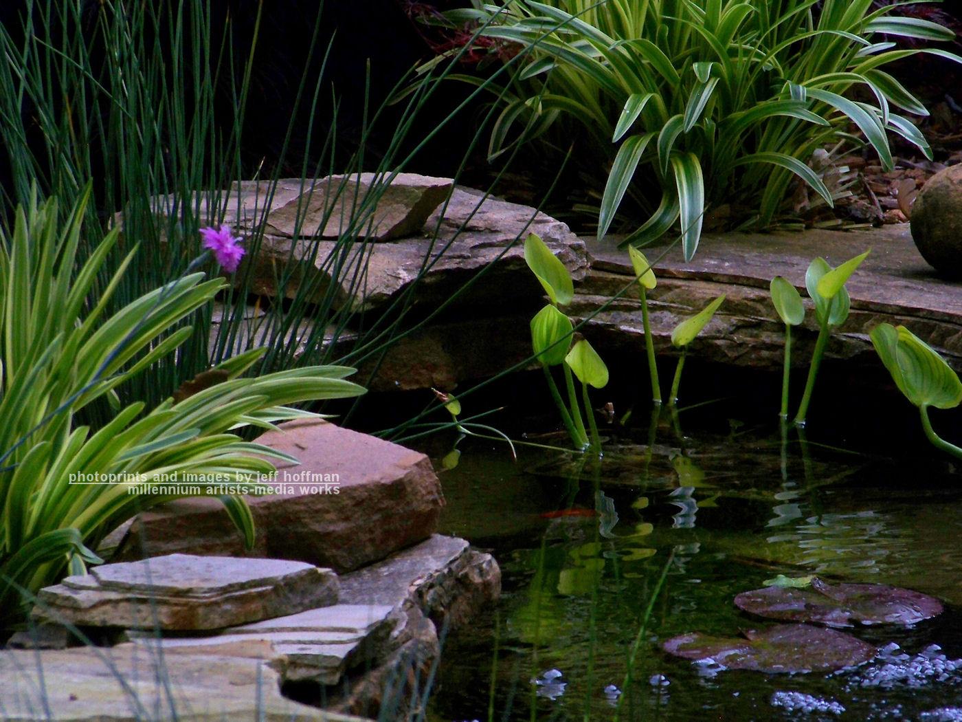 Small koi pond by jamdebris on deviantart for Koi fish pond plants