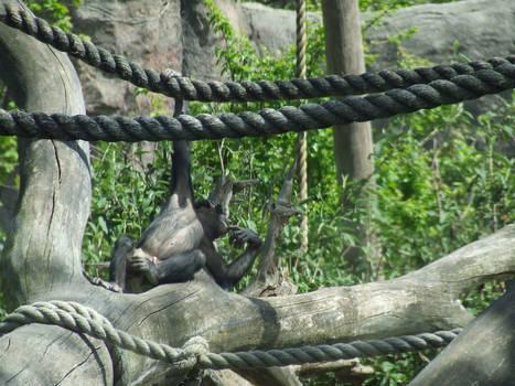 Hanging around 2