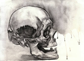 Skull study by Sir-Pumpkinhead
