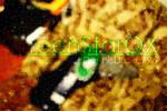 Official Wallpaper: GreenStarQX