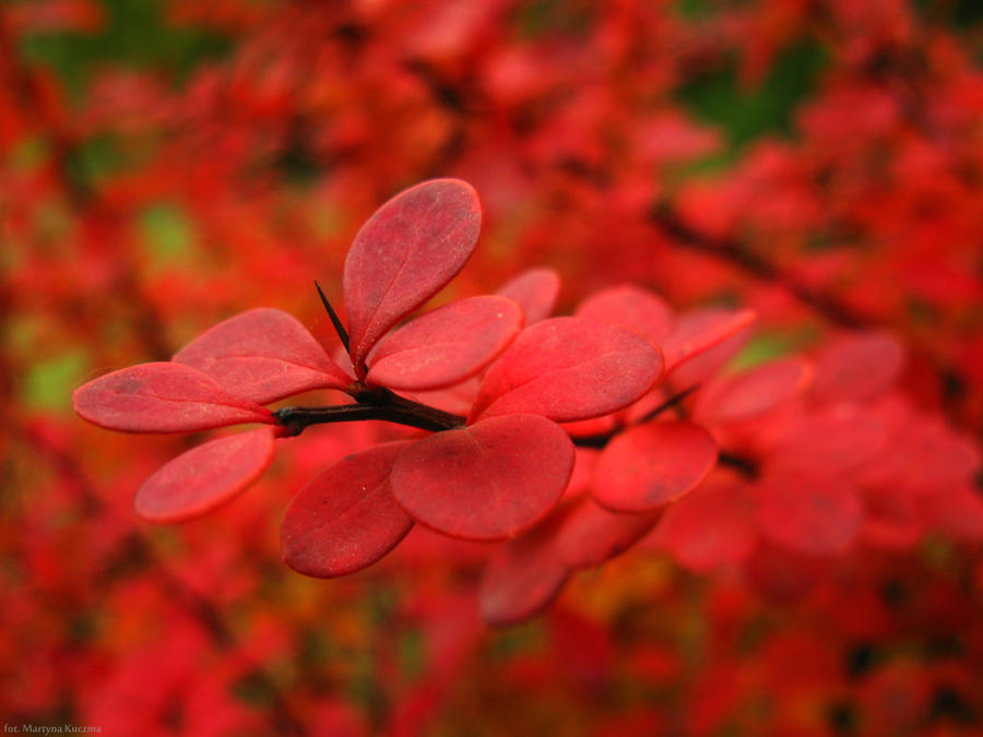 Autumn III by shimahi