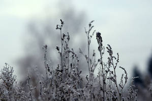 Winter by shimahi