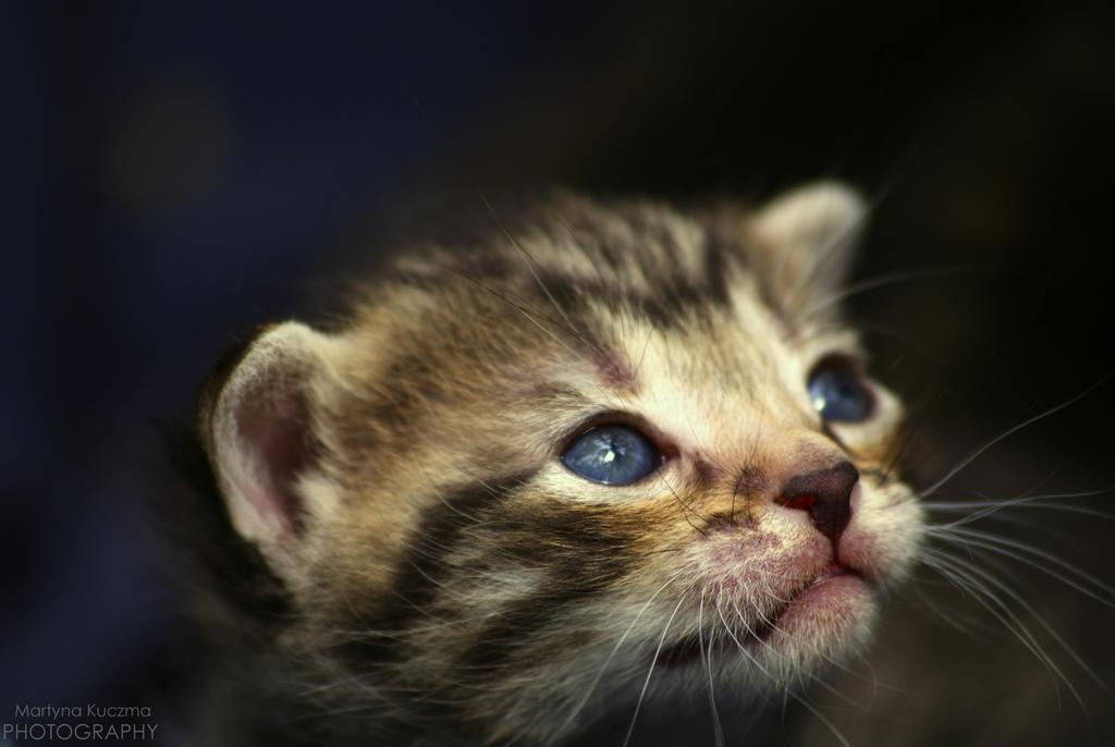Kitty by shimahi