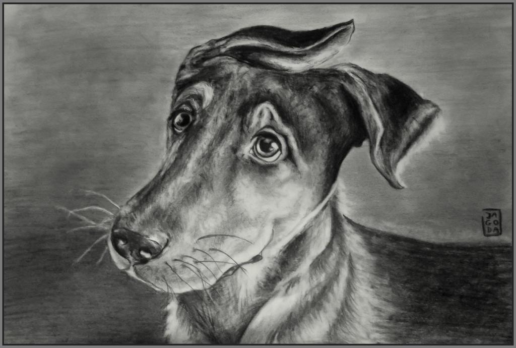 Browar the Dog by JAGODA-DRAWINGS