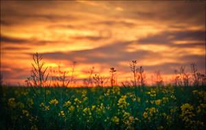 Spring Sunset by HarDMuD