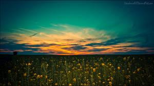 SunlyTwillight by HarDMuD