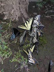Butterfly Nest