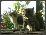 Cats by Csiwi