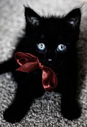 Sissel, the cat