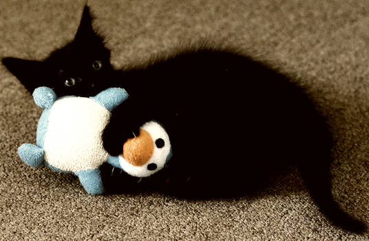 Sissel and his toy
