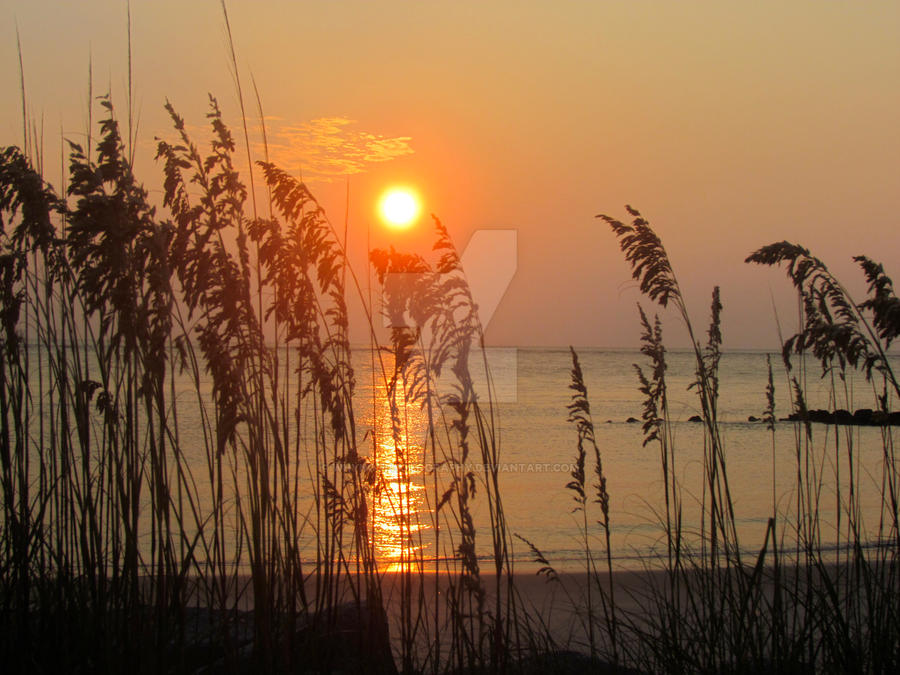 Sea Oat Sunrise by whynotphotography