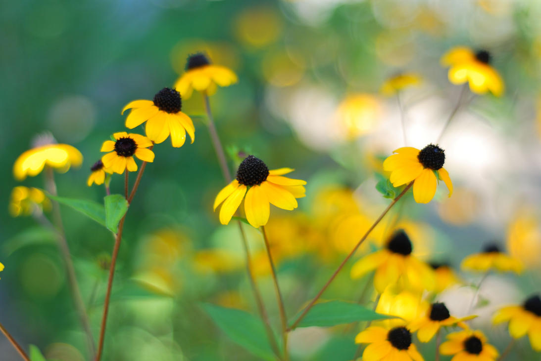 Yellow flowers by corsuse