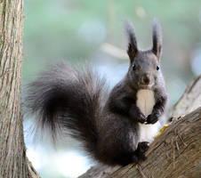 The Squirrel Kiki by corsuse