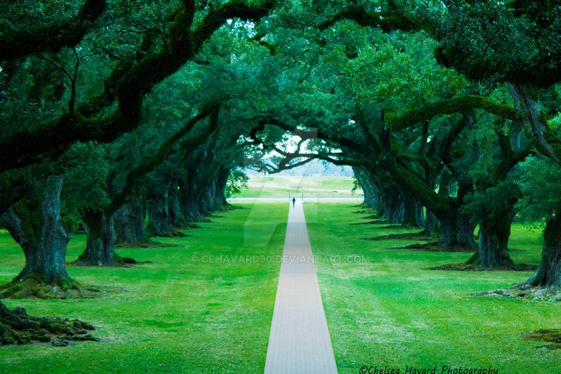 Oak Alley Plantation by cehavard90