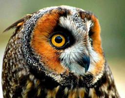 Owl by TB-Photo