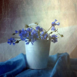 Blue summer... by Luciuuu