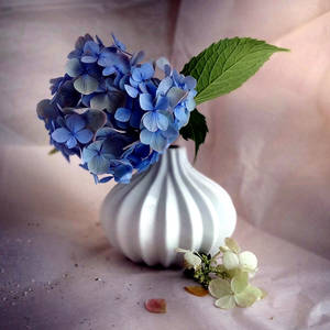 Blue fullness...