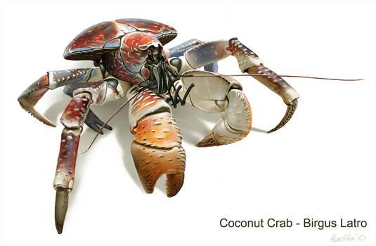 Coconut Crab - Birgus Latro