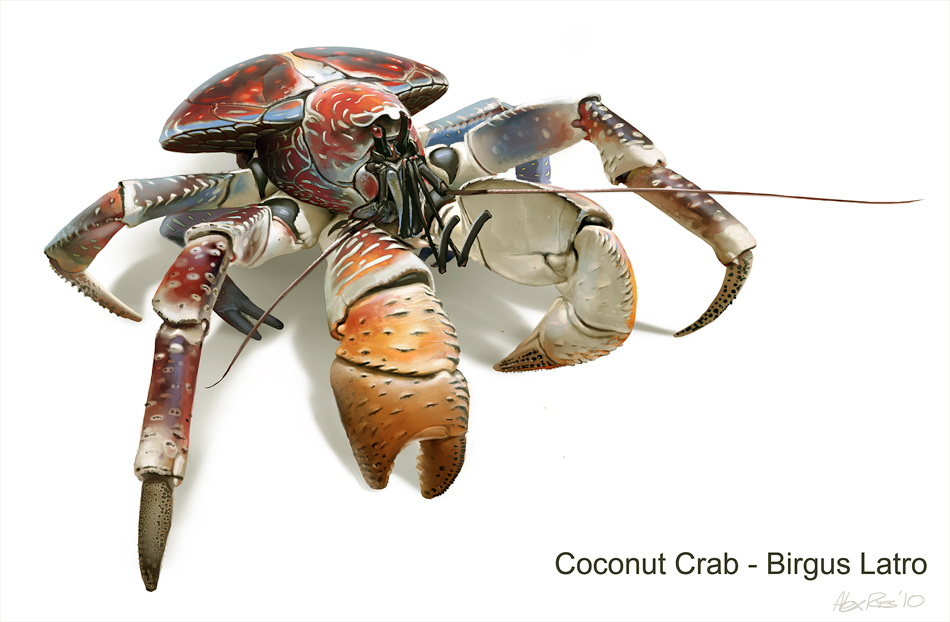 Coconut Crab - Birgus Latro by Abiogenisis on DeviantArt