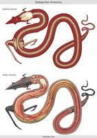 Galkgrokst Anatomy