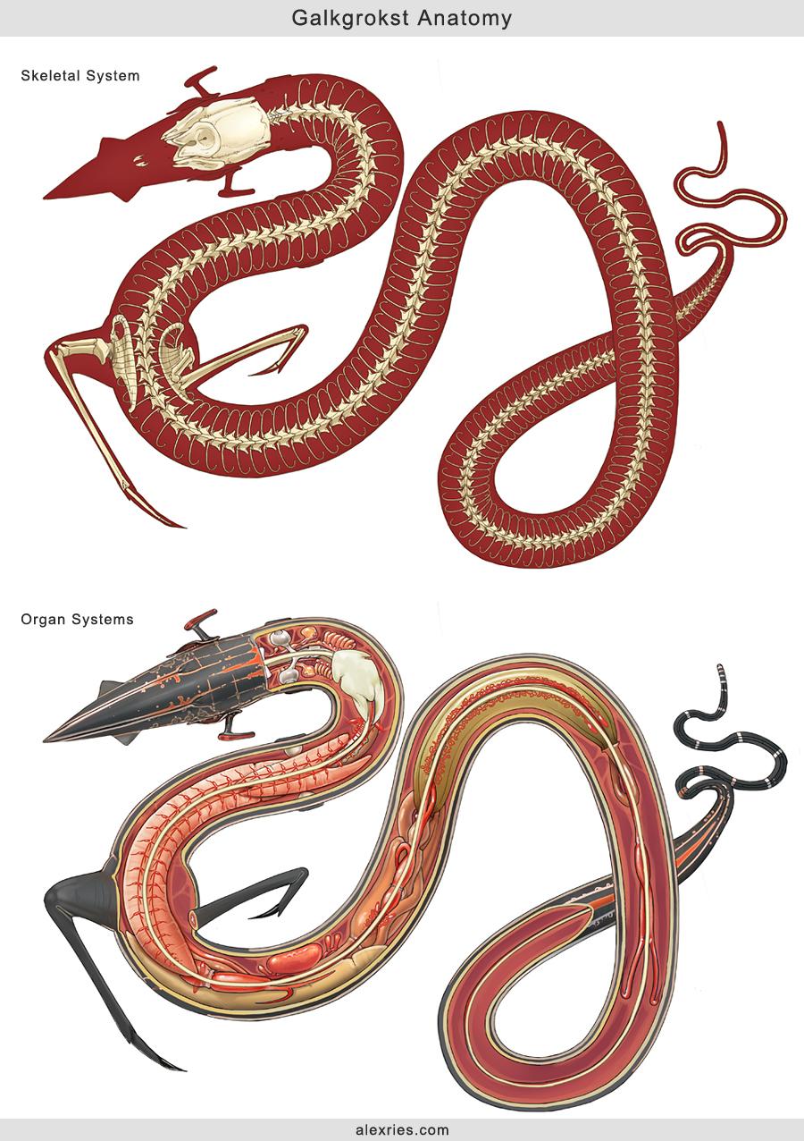 Galkgrokst Anatomy by Abiogenisis