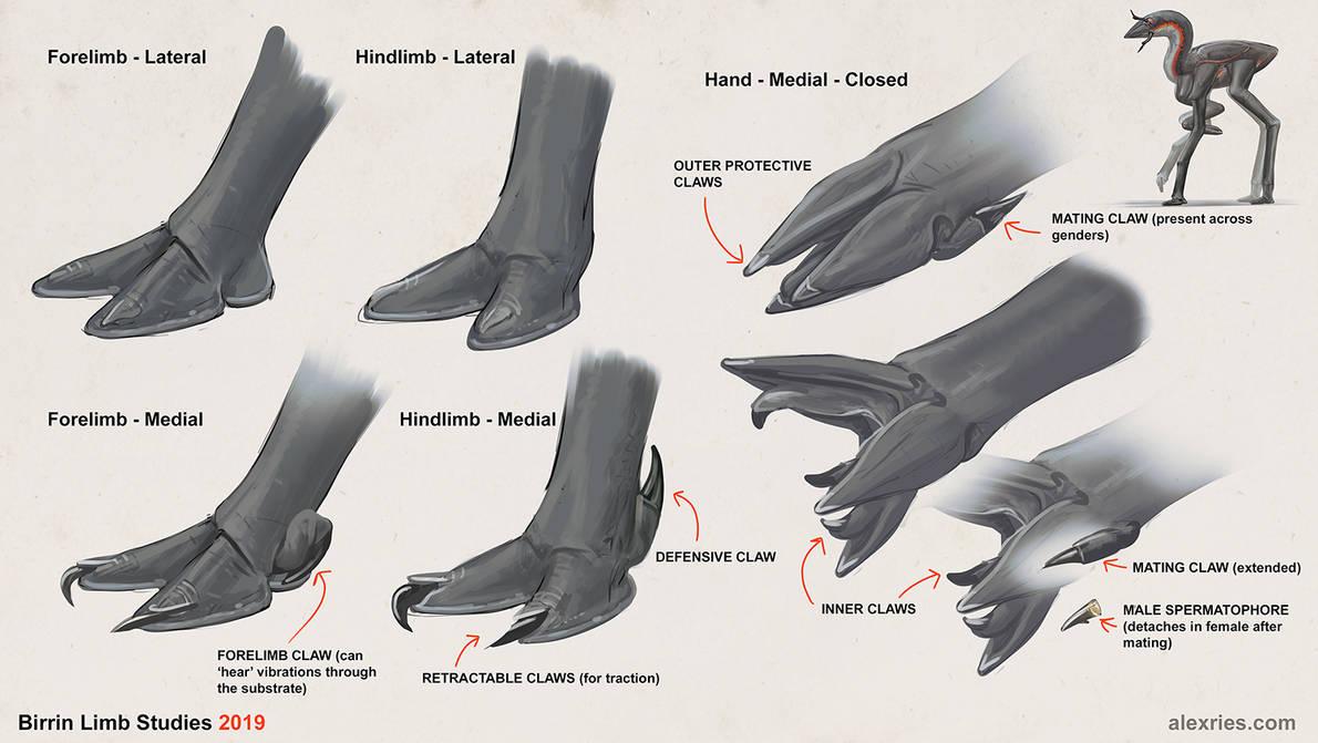 Birrin - Limb Designs by Abiogenisis