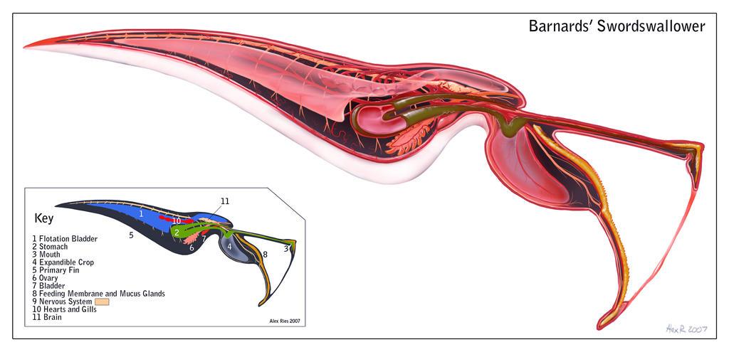 Alien Anatomy By Abiogenisis On Deviantart