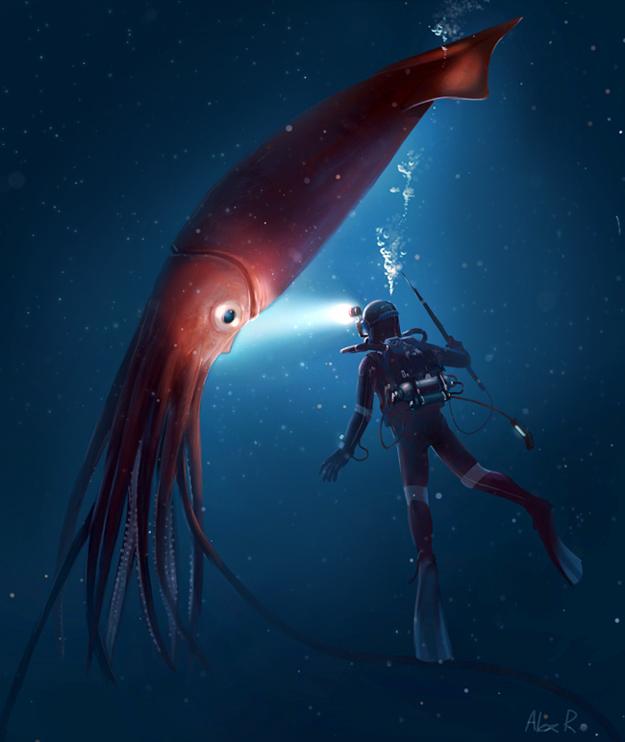 Free Giant Squid Wallpaper
