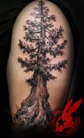 Pine Tree Redwood Pacific  Tattoo Jackie Rabbit