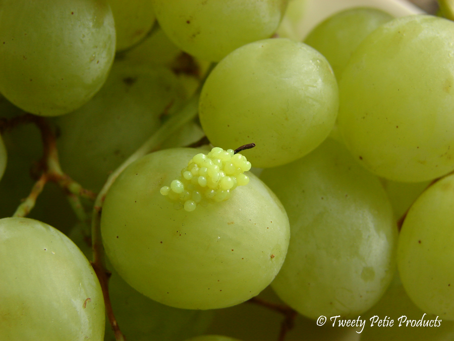 Tart Green Grapes by birdielover