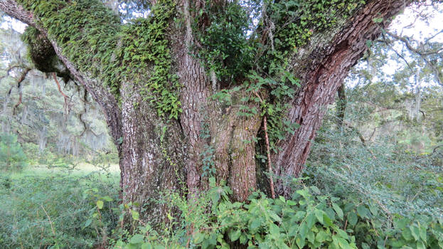Oak glen watchman 1