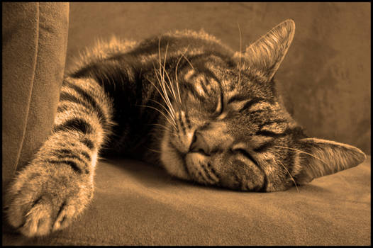 Kitty Cat 01