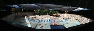 Flamingo pool by Ronskie