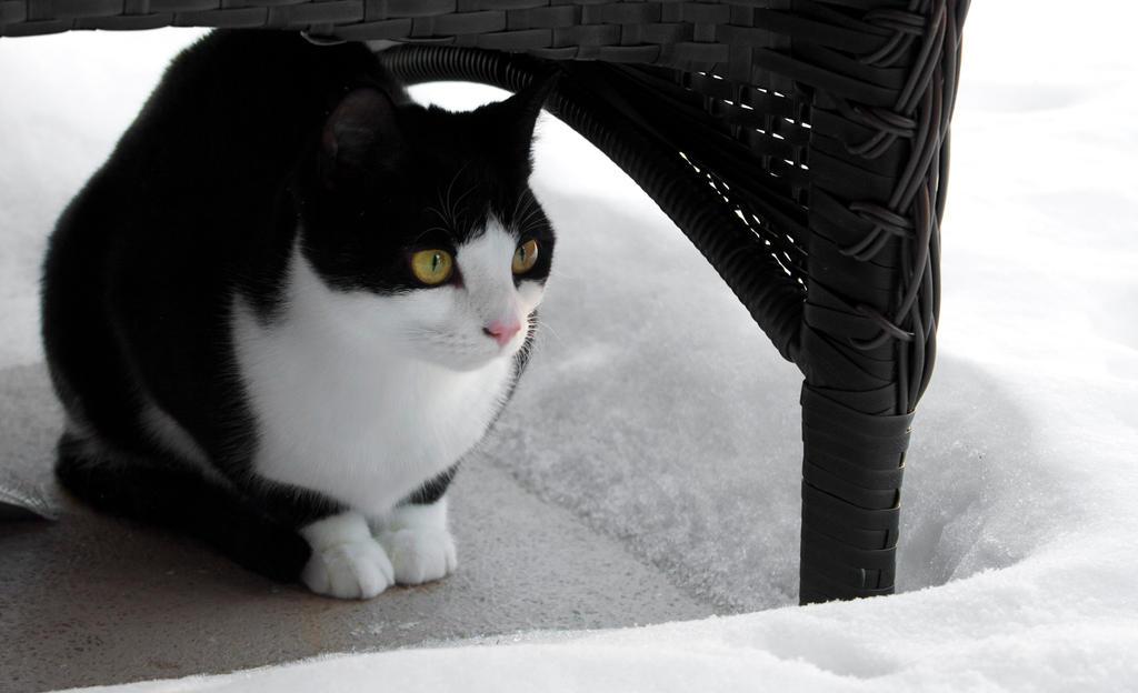 Snow Kitty by Jellokatamari