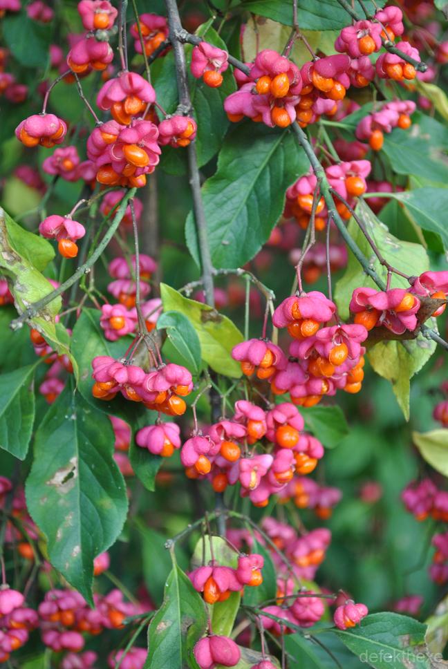 Pretty in Fuchsia by defekthexe