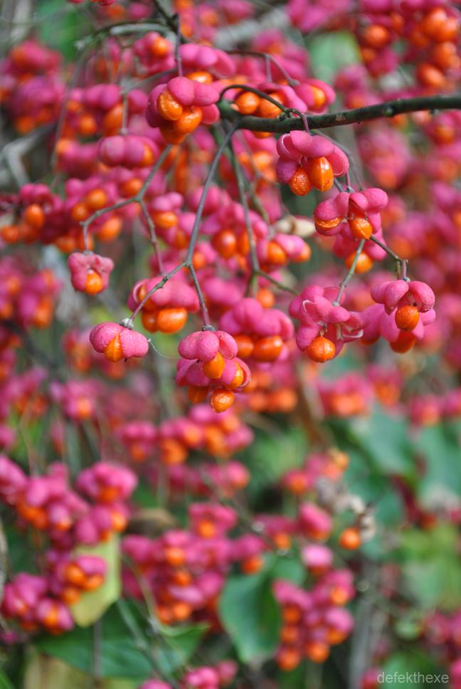 Pretty in Fuchsia III by defekthexe