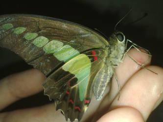 Just a butterflies