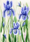 irises by TreborNehoc