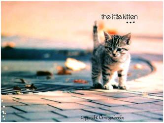 The Little Kitten by Bonnyflower
