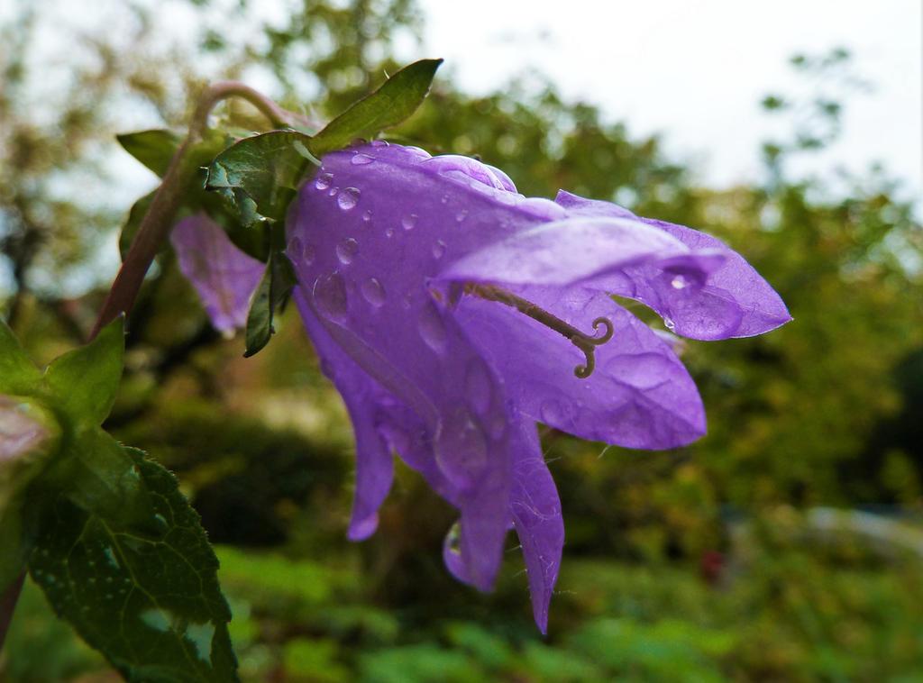 Autumn Rain by mockingbirdontree