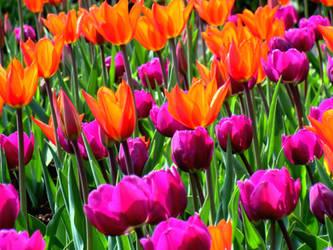 Flower Power by mockingbirdontree
