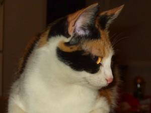 mockingbirdontree's Profile Picture