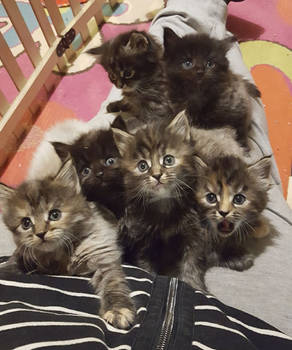 All this cute kitties from this cat mom!