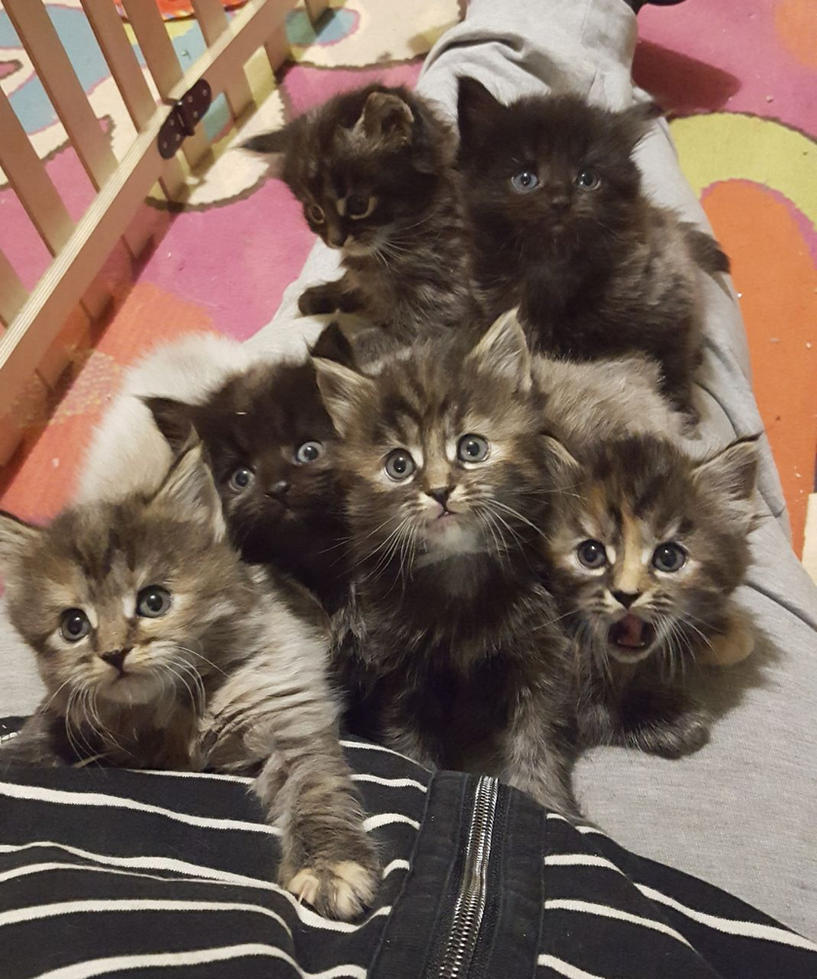 All this cute kitties from this cat mom! by mockingbirdontree